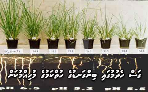 Ph and plant growth